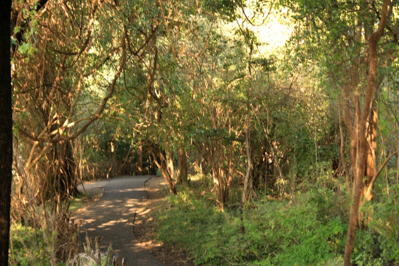 The rainforest walk ....
