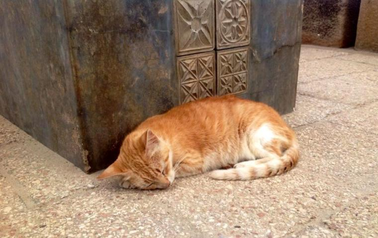 Golden or ginger cats are well represented on the island ...