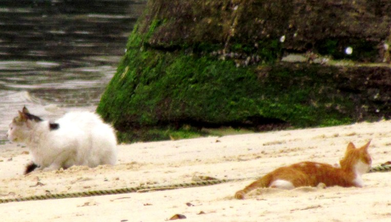 The cats in Stone Town have no fear of the water, they laze around on the beach waiting for something to wash up for them to catch and to eat