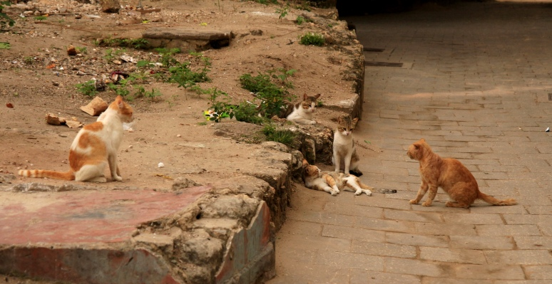A group of alley cats hanging around waiting for the fish hawker … they heard the bell and are waiting in anticipation …