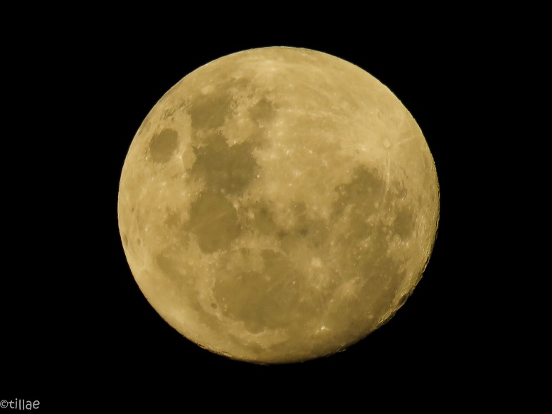 Sister Moon, lighting up the sky ...